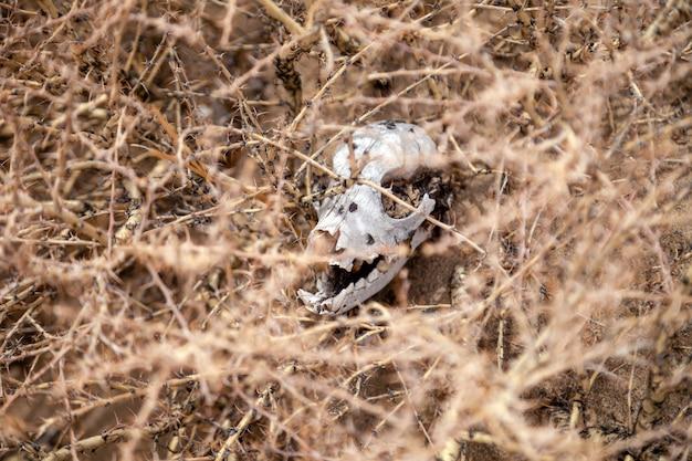 Petite tête d'animal mort entre les plantes
