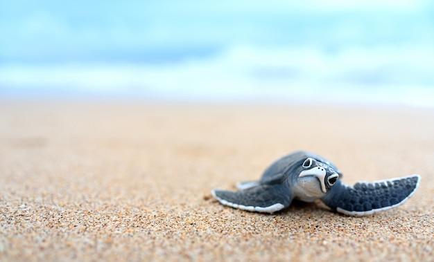 Petite tortue sur une plage blanche