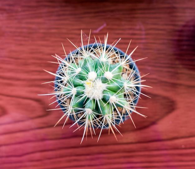Petites espèces de cactus dans un vase sur une table en bois, vue de dessus