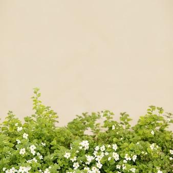 Petites fleurs blanches.
