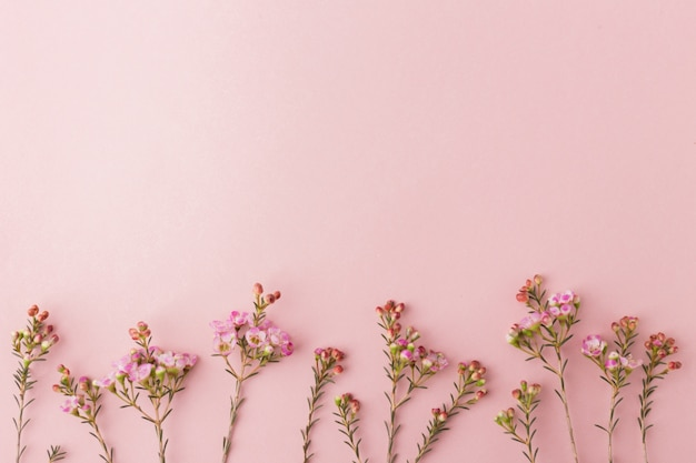 Petites fleurs épanouies pourpres