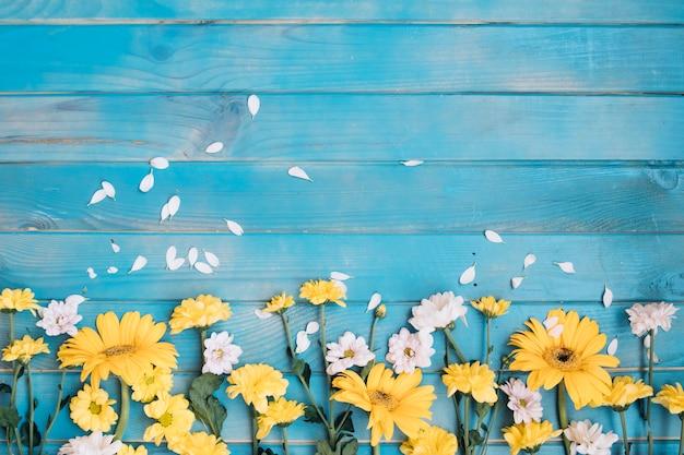 Petites fleurs jaunes et blanches