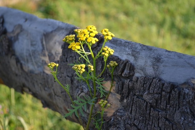 Petites fleurs jaunes sur une tige le matin