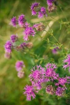 Petites fleurs sauvages sur fond d'herbe, gros plan, verticalement