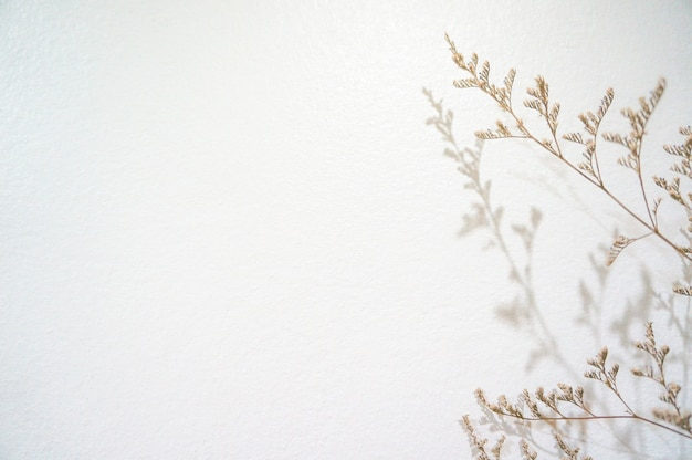 Petites fleurs tombe ombre sur un mur blanc