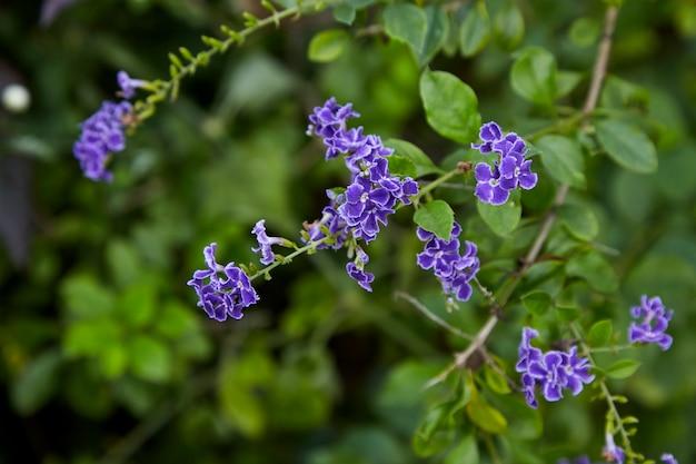 Petites fleurs violettes à feuilles vert vif