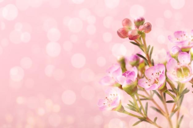 Petites fleurs violettes sur fond rose