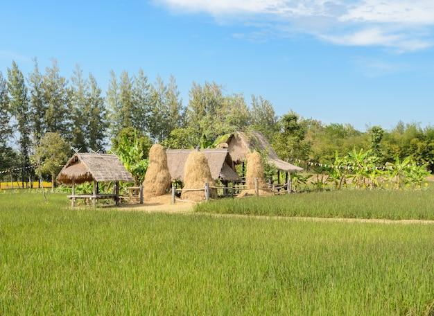 Petites huttes dans les rizières, thaïlande