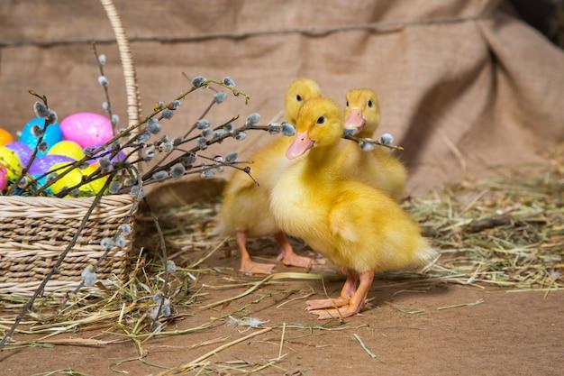 Petites oies canard jaune sur fond naturel
