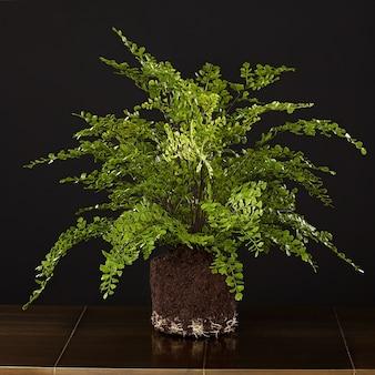Petites plantes de décoration dans une forêt de bouteilles de terrarium de terrarium de bouteille en verre dans un bocal