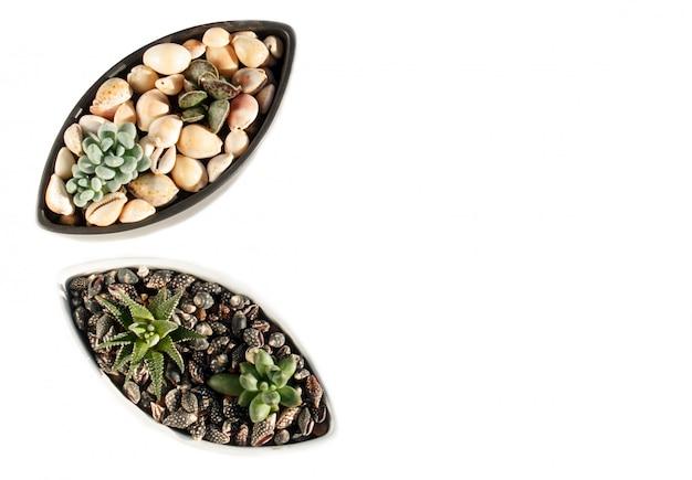 Petites plantes succulentes dans un pot en céramique