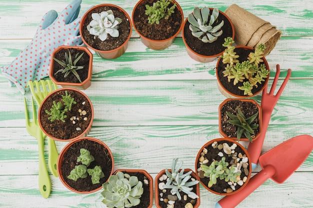 De petites plantes succulentes sont prêtes à être transplantées sur un fond en bois