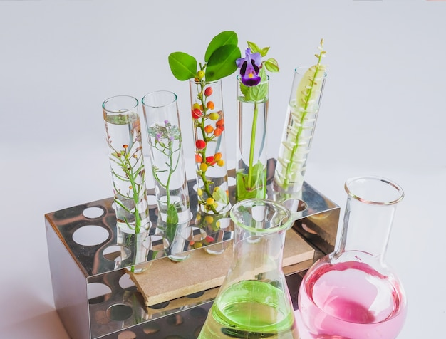 Petites plantes en tube à essai pour la recherche en biotechnologie.
