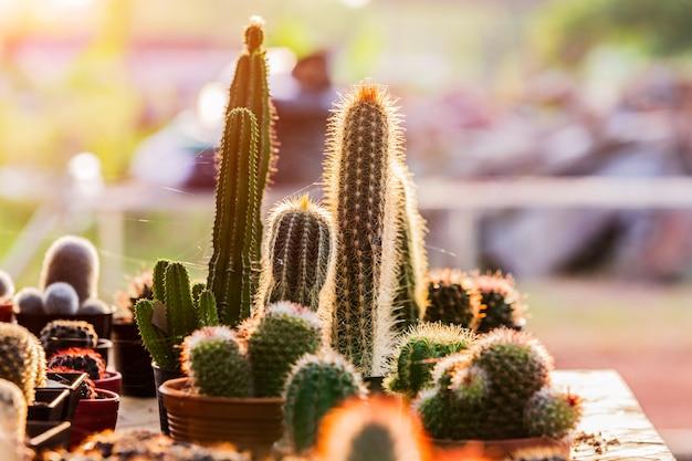 Petits cactus et plantes succulentes au magasin de fleurs