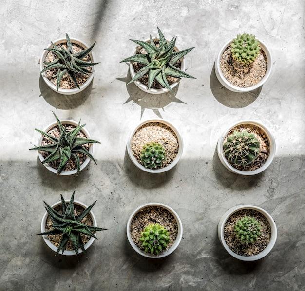 Petits cactus sur le sol