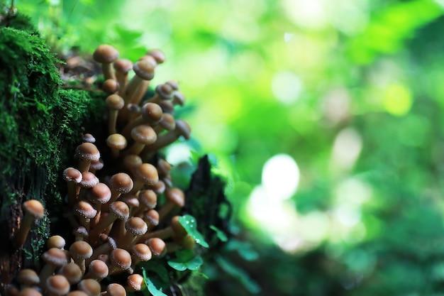 Petits champignons macro / forêt nature, forte augmentation de la moisissure des champignons vénéneux