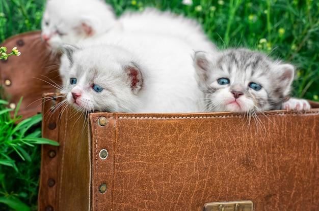 Petits chatons jouant dans une vieille valise
