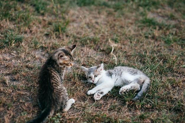 Petits chatons jouant sur l'herbe