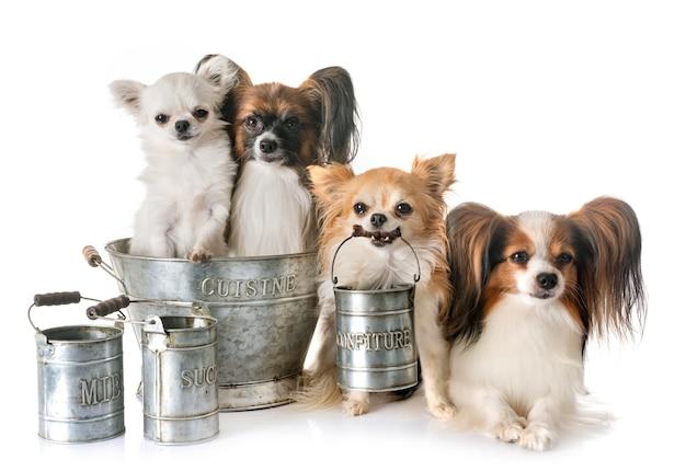 Petits chiens cuisinant