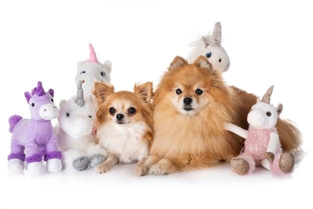 Petits chiens et licorne