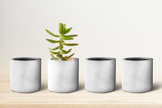 Petits pots de plantes gris d'affilée avec une succulente