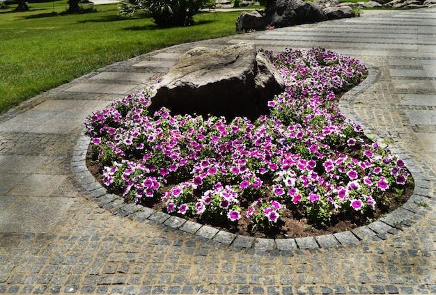 Pétunias roses et blancs sur un lit de fleurs ovale avec une pierre