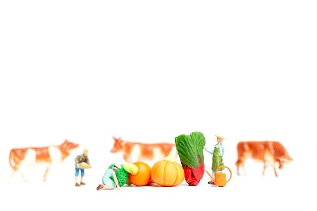 Peuple miniature: jardiniers récolter un légume sur fond blanc