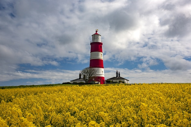 Phare de happisburgh au milieu du champ avec des fleurs jaunes à norfolk, royaume-uni