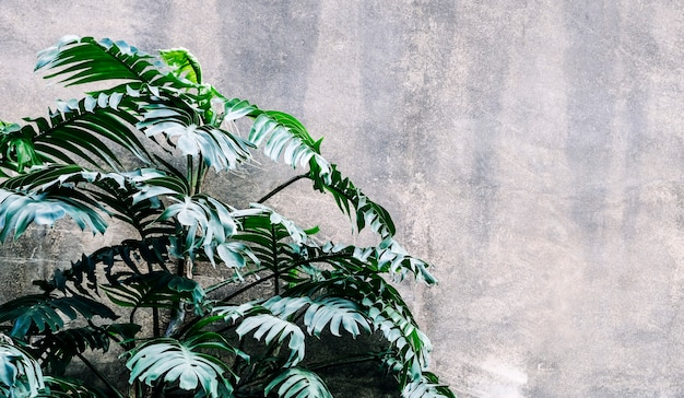 Philodendron dans le jardin fond de feuilles tropicales