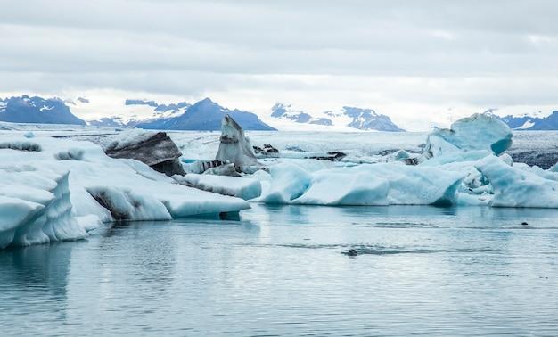 Un phoque nageant librement dans le lac de glace de jokulsarlon. islande