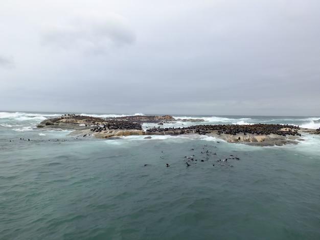 Phoques dans l'océan atlantique, afrique du sud