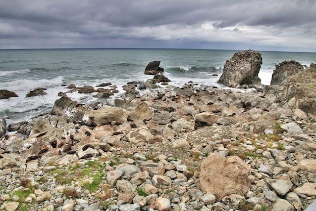 Phoques dans le pacifique, kaikoura, nouvelle zélande