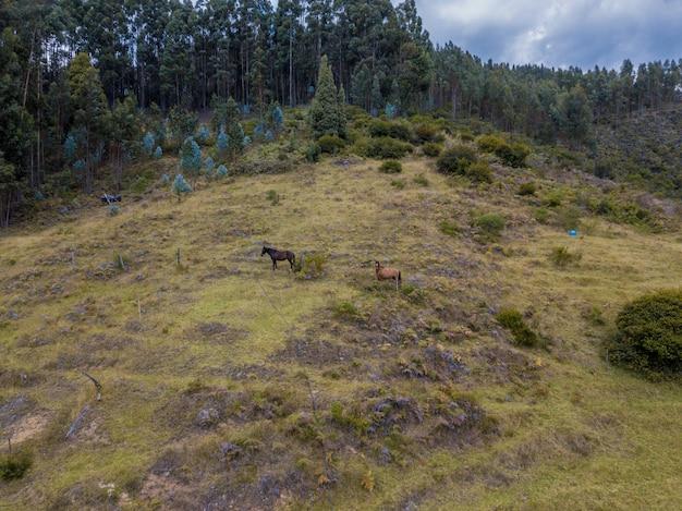 Photo aérienne de chevaux