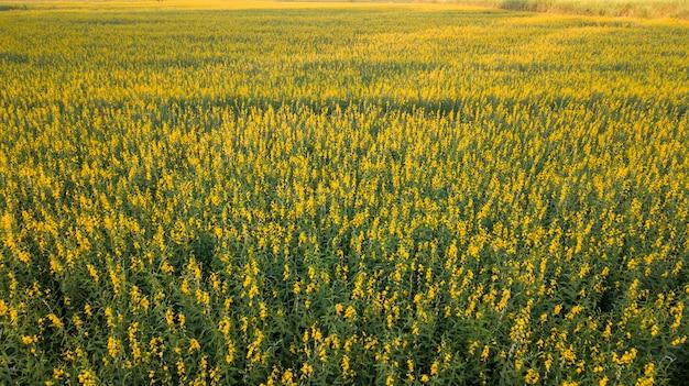 Photo aérienne de drones du champ de pomelo beau jaune d'or