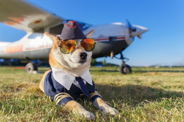 Photo amusante du chien akita inu