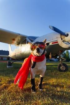 Photo amusante du chien shiba inu
