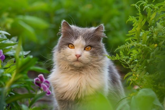 Photo de chat à poils courts dans le jardin d'été le soir