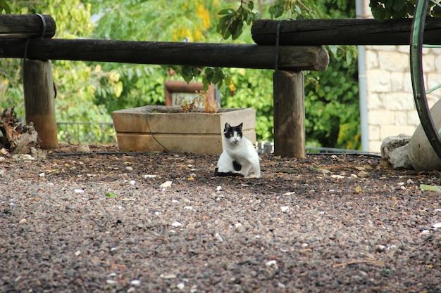 Photo d'un chat. races combinées de poils longs domestiques avec un nez plat au nez haut