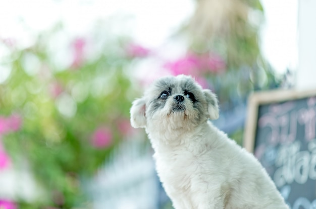 Photo de chien blanc, séance photo mignonne, concept de chien d'amour