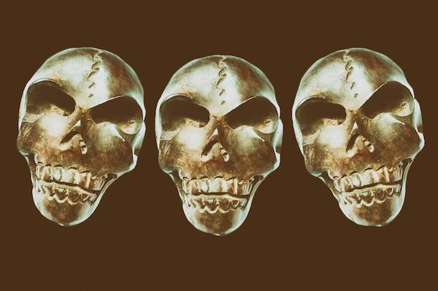 Photo de crâne en bois pour halloween
