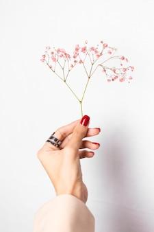 Photo douce et douce de la main de la femme avec manucure rouge grand anneau tenir de jolies petites fleurs séchées roses sur blanc.