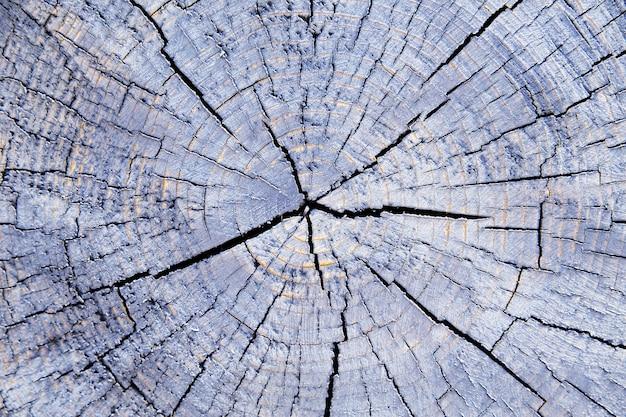 Photo du noyau en bois. fond de bois