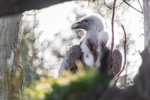 Photo encadrée d'un faucon à la recherche de loin