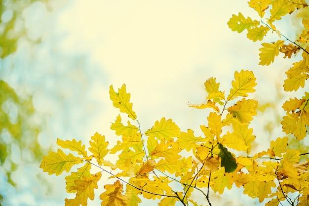 Photo de feuilles d'automne sur fond flou