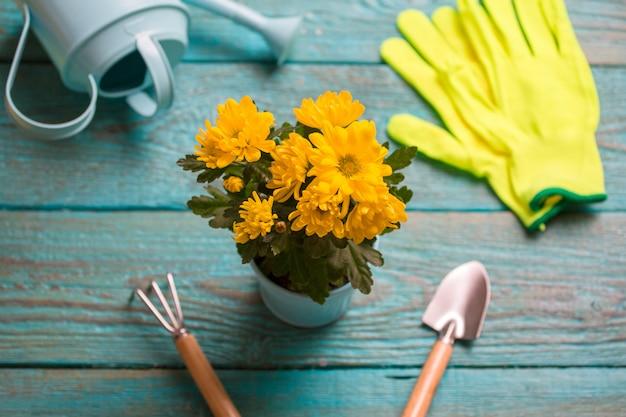 Photo sur la fleur, gants en caoutchouc, omoplates, râteau
