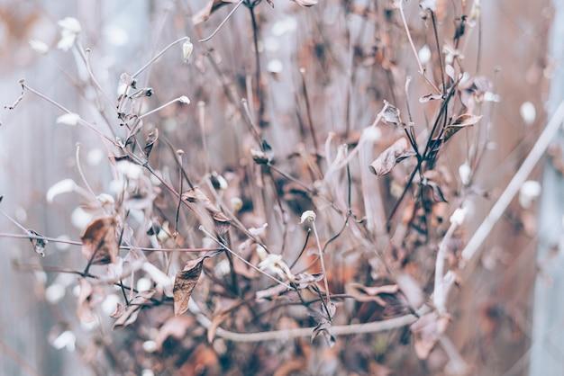 Photo florale art sombre moody avec de petites fleurs séchées sur l'hiver sombre