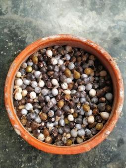 Photo de graines de larmes de job dans un pot d'argile