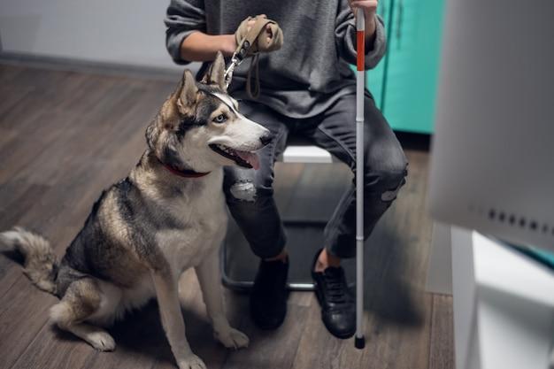 Une photo en gros plan d'un beau chien-guide husky en laisse.