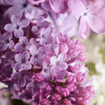 Photo en gros plan de belles fleurs lilas.