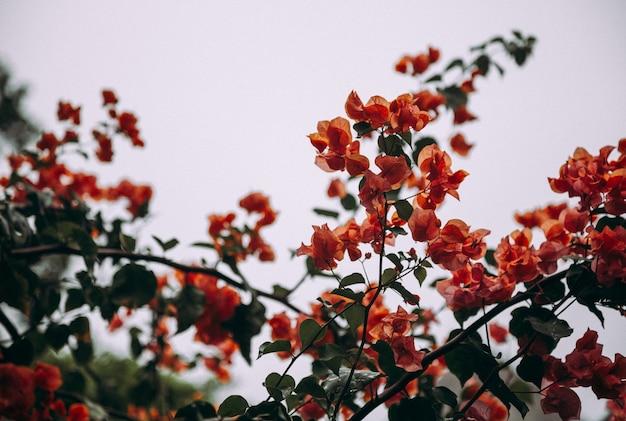 Photo gros plan d'une branche d'arbre en fleurs avec des fleurs orange.